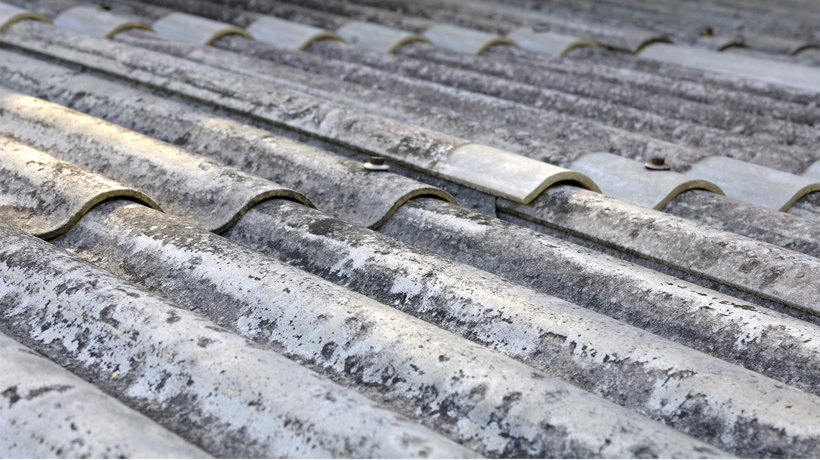 Professional Asbestos Removal Services in Australia - Myers